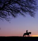 Pferdefotografie bei München: Silhouette von Pferd und Reiterin unter einem Baum