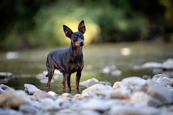 Hilfe, mein Hund folgt nicht gut genug für eine Fotosession!