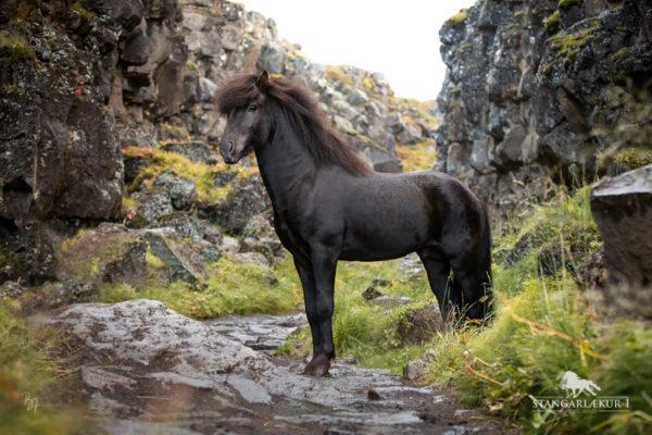 Island Herbst 2020: Kveikur frá Stangarlæk 1