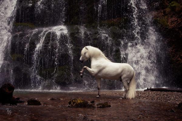 Pferdefotosession am Wasserfall | Ísbjörn