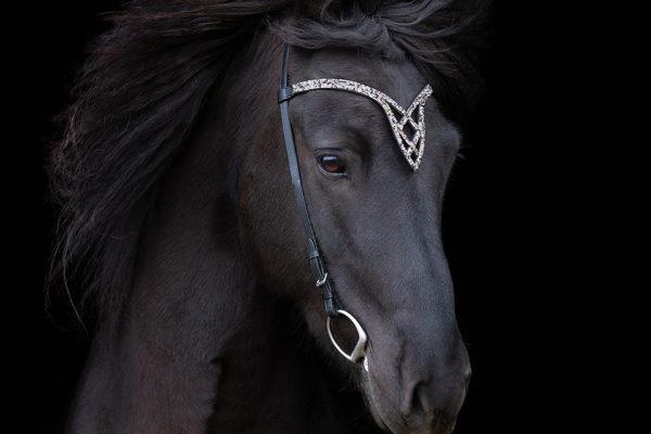 Pferdeportrait im Sturm