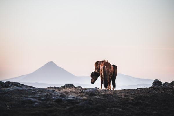 Trockenheit auf Island