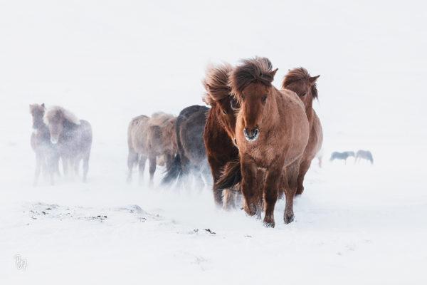 Nordisland im Winter
